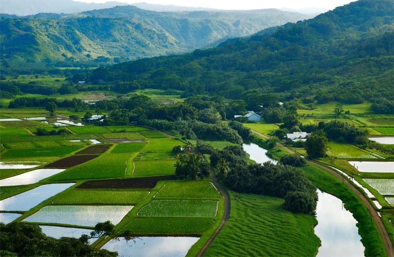 생태 Hanalei-Valley