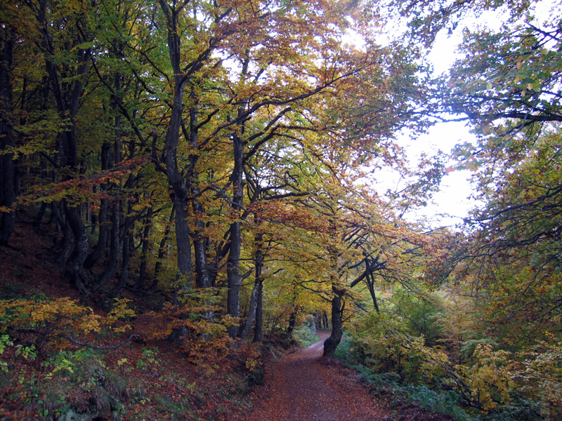 Mixed deciduous forest in Stara Planina, Serbia. 사진=위키백과