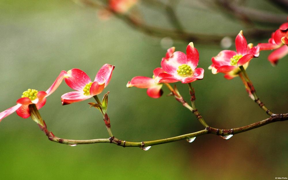 """""""봄이 오면 비둘기 목털에 윤이 나고 봄이 오면 젊은이는 가난을 잊어버린다. 그러기에 스물여섯 된 무급조교(無給助敎)는 약혼을 한다. 종달새는 조금 먹고도 창공을 솟아오르니, 모두들 햇빛 속에 고생을 잊어보자."""""""