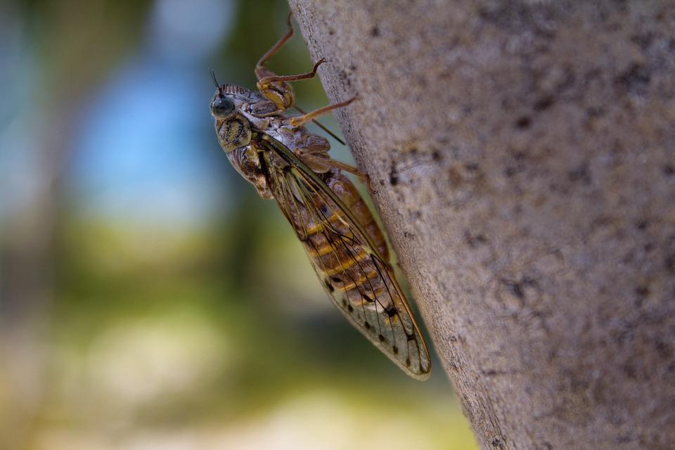 매미 곤충 여름 cicada-570831_960_720