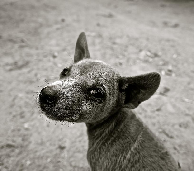 dog-589002_960_720