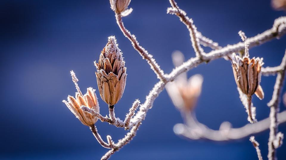 사람과 사회도 떨켜가 필요하다. 나무가 떨켜로 탐스러운 나뭇잎을 땅, 대지의 여신인 가이아에게 내려보내는 것은 새로운 생명의 약속인 봄을 맞기 위한 것이다.